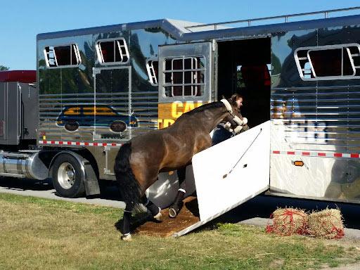 California Horse Shipping, Horse transport companies in California
